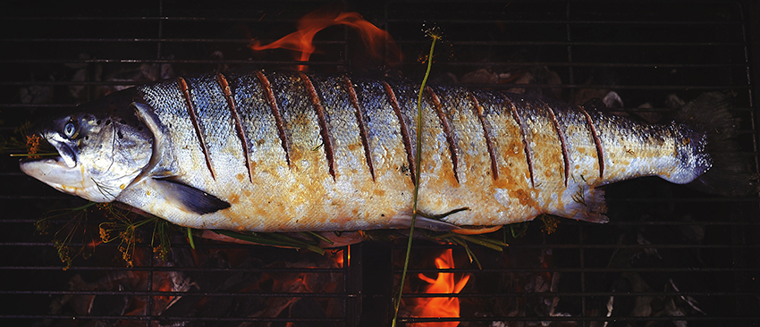 Salmon roasting on hot coals with Havsnø sea salt flakes, havsalt, flaksalt, Meersalzflocken